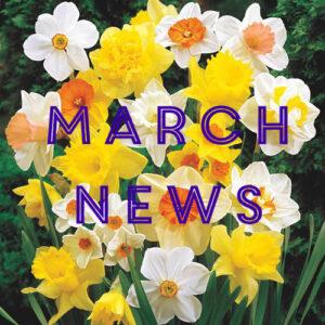 Narcissus -Giant Daffodils SKU 67225 SKU 82196 SKU 84705 SKU 82131 SKU 82131